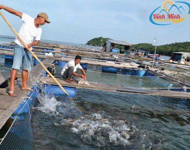 Kĩ thuật nuôi cá lồng (2)